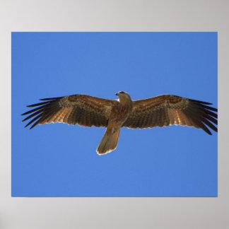 笛を吹く凧、アデレードの川2 ポスター