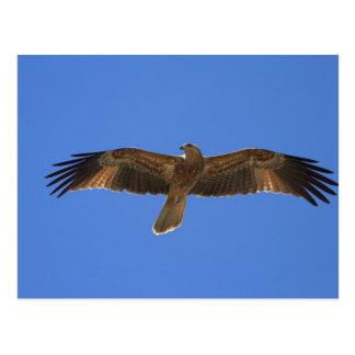 笛を吹く凧、アデレードの川2 ポストカード