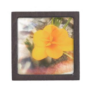 第1春の花 ギフトボックス