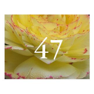 第47誕生日 ポストカード