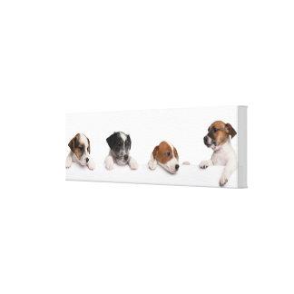 箱からかいま見ているジャックラッセルテリアの子犬 キャンバスプリント