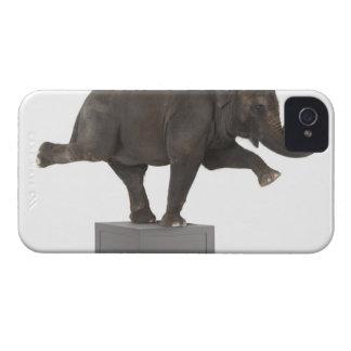 箱のトリックを行っている象 Case-Mate iPhone 4 ケース