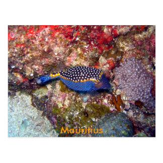 箱の魚、マリシャス ポストカード