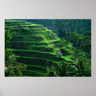 米はバリ島インドネシアの守備につきます ポスター