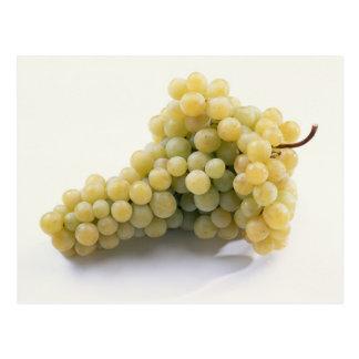 米国だけの使用のための白葡萄。) ポストカード
