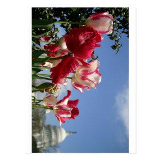 米国の国会議事堂の春 ポストカード