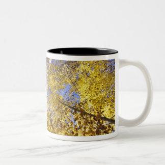 米国の太平洋の北西。 秋の《植物》アスペンの木 ツートーンマグカップ