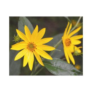 米国中西部ミズーリの黄色い野生の花 キャンバスプリント