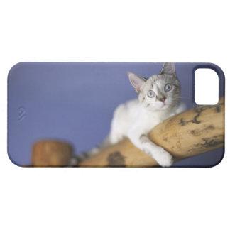 米国、アイオワの若い子ネコのポートレート iPhone SE/5/5s ケース
