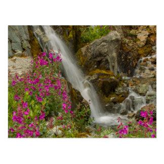 米国、アラスカのグレーシャー入江の国立公園。 Fireweed ポストカード