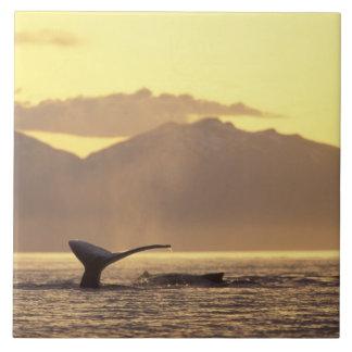 米国、アラスカの中の道のザトウクジラの 正方形タイル大