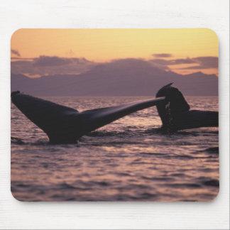 米国、アラスカの中の道のザトウクジラ マウスパッド