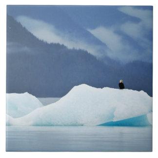 米国、アラスカの中の道。 とまる白頭鷲 正方形タイル大