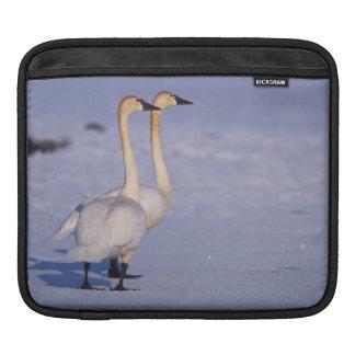 米国、アラスカの中央アメリカコハクチョウの大人 iPadスリーブ