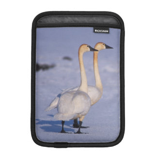 米国、アラスカの中央アメリカコハクチョウの大人 iPad MINIスリーブ