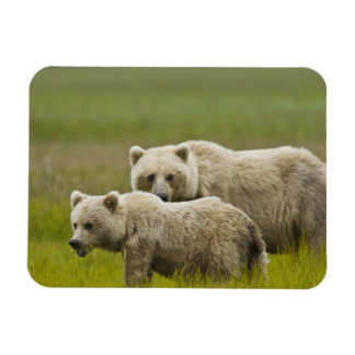米国、アラスカの湖のクラーク国立公園。 お母さん マグネット