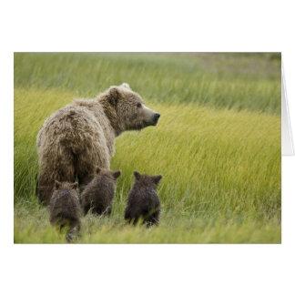 米国、アラスカの湖のクラーク国立公園。 ハイイログマ カード