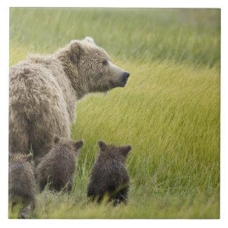 米国、アラスカの湖のクラーク国立公園。 ハイイログマ タイル