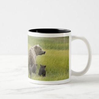 米国、アラスカの湖のクラーク国立公園。 ハイイログマ ツートーンマグカップ