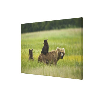 米国、アラスカの湖のクラーク国立公園。 A キャンバスプリント