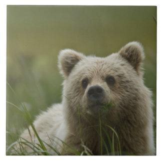 米国、アラスカの湖のクラーク国立公園。 A タイル