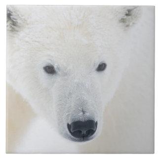 米国、アラスカの1002北極3の海岸平野 タイル