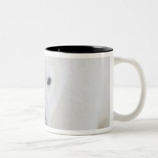 米国、アラスカの1002北極3の海岸平野 ツートーンマグカップ