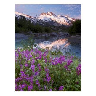 米国、アラスカのAlsek-Tatshenshiniの荒野 ポストカード