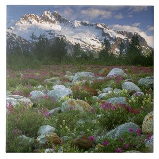米国、アラスカのAlsek-Tatshenshiniの荒野。 眺め 正方形タイル大
