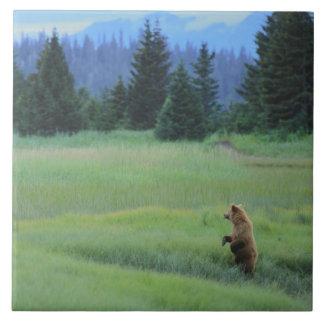 米国、アラスカのClark Lakeの国立公園。 ハイイログマ タイル