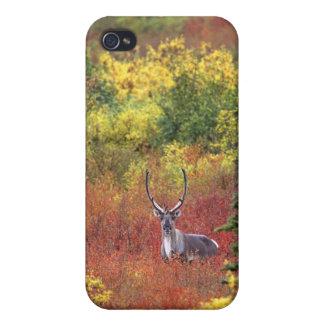 米国、アラスカのDenaliの国立公園。 カリブー iPhone 4 Cover