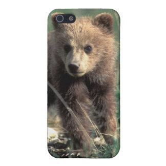 米国、アラスカのDenaliの国立公園、ハイイログマ iPhone SE/5/5sケース