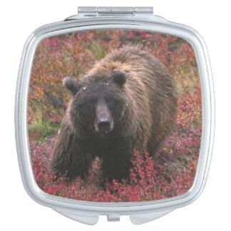 米国、アラスカのDenaliの国立公園。 灰色グマ