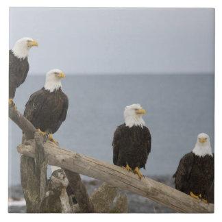 米国、アラスカのKachemak湾、ホーマーのつば。 禿げた 正方形タイル大