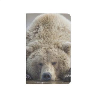米国、アラスカのKatmaiの国立公園、ヒグマ4 ポケットジャーナル