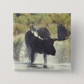 米国、アラスカのKatmai NPのアメリカヘラジカのシャワー 5.1cm 正方形バッジ