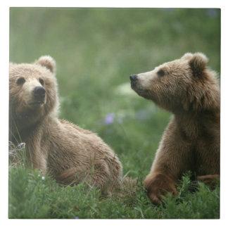 米国、アラスカのKodiak 2の副大人のヒグマ 正方形タイル大