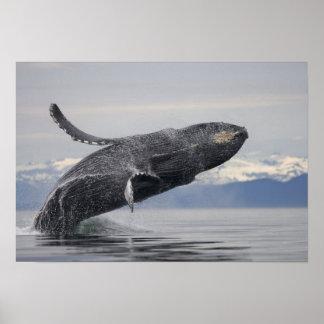 米国、アラスカのTongassの国有林、Humpback 2 ポスター