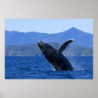 米国、アラスカ島ウェールズ王子。 Humpback ポスター