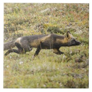 米国. アラスカ。 アカギツネはDenaliで犠牲につきまといます タイル