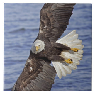 米国、アラスカ、ホーマー。 上記の白頭鷲のダイビング 正方形タイル大
