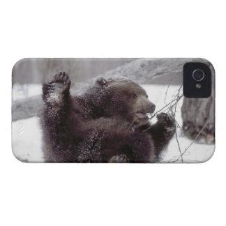 米国、アラスカ。 木が付いている年少のハイイログマの演劇 Case-Mate iPhone 4 ケース