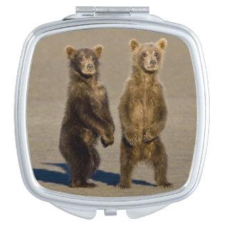 米国. アラスカ。 沿岸ヒグマの幼いこどもは彼等の見ます