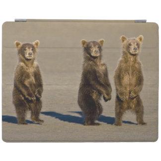 米国. アラスカ。 沿岸ヒグマの幼いこどもは彼等の見ます iPadスマートカバー