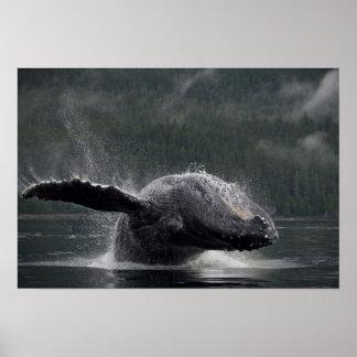 米国、アラスカ、AngoonのザトウクジラのMegaptera 2 ポスター