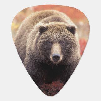 米国、アラスカ、Denali NPの女性の灰色グマ ギターピック