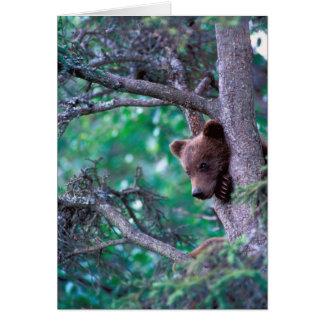 米国、アラスカ、Katmai NPの灰色グマの幼いこども カード