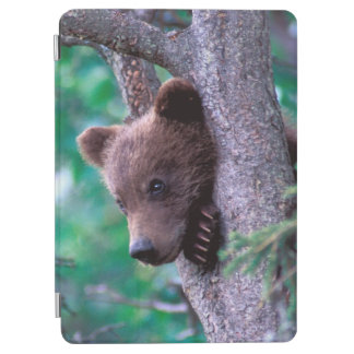 米国、アラスカ、Katmai NPの灰色グマの幼いこども iPad Air カバー