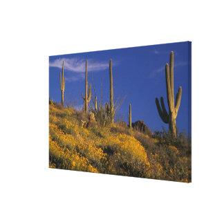 米国、アリゾナのオルガン管のサボテンの国民2 キャンバスプリント