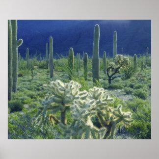 米国、アリゾナのオルガン管のサボテンの国民 ポスター